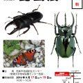 ④ポスター(大きさ変化)